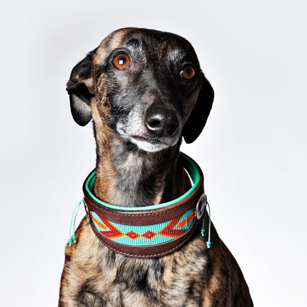 DWAM Paddy Lee Halsband Greyhound